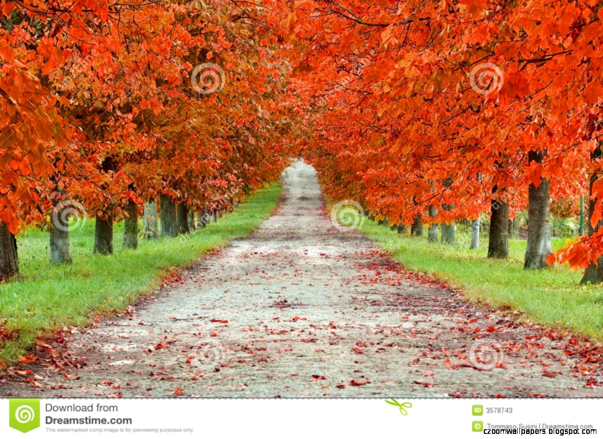 Autumn Boulevard Stock Photos   Image 3578743