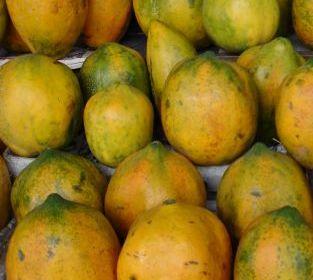 Diet Sehat Makan Sehat Manfaat buah pepaya
