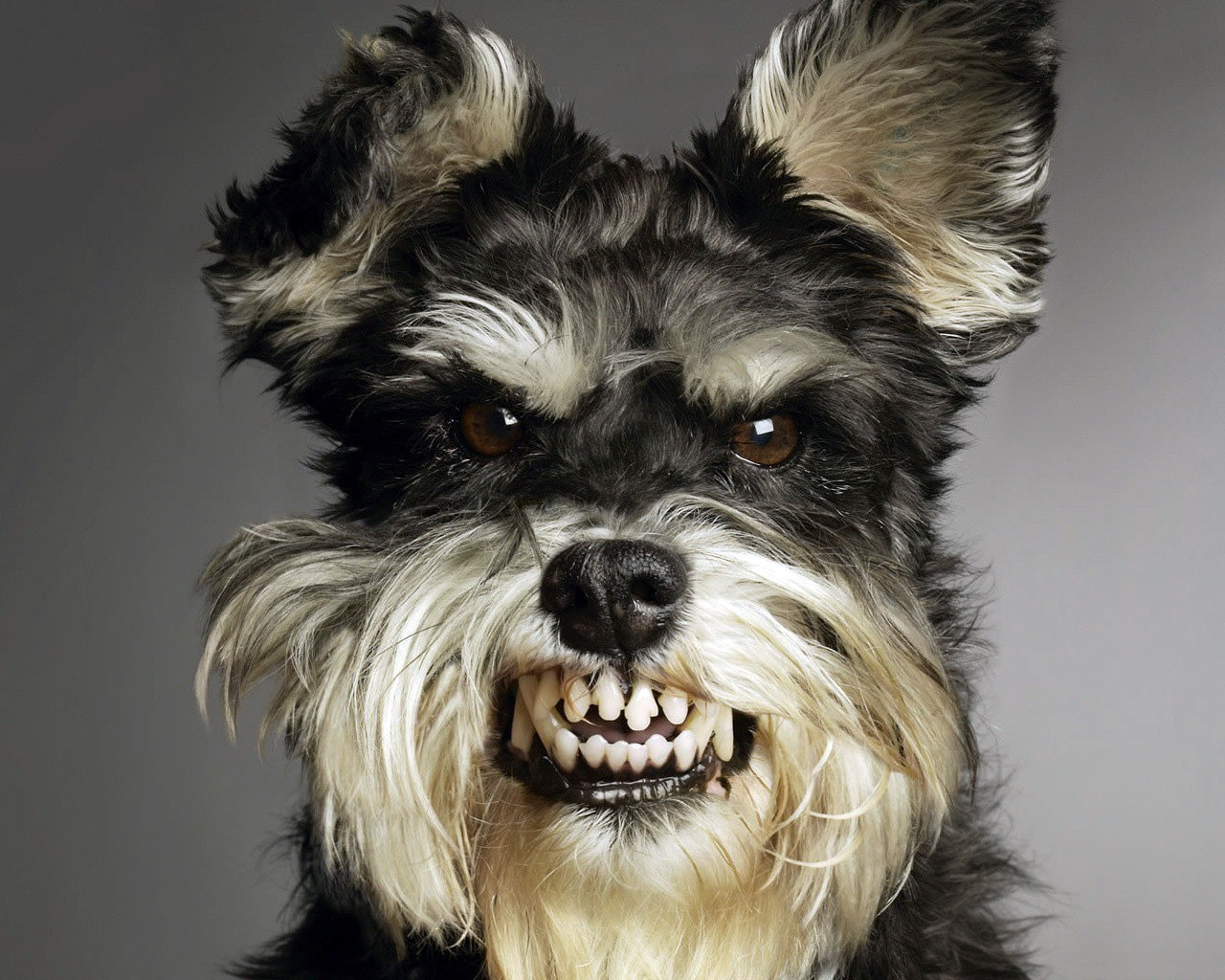Funny Dog Wallpaper All Wallpapers:...