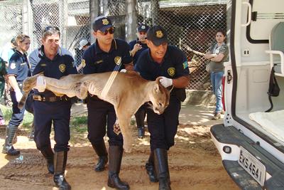 Guarda Civil Municipal de Bragança Paulista: Maquiagem