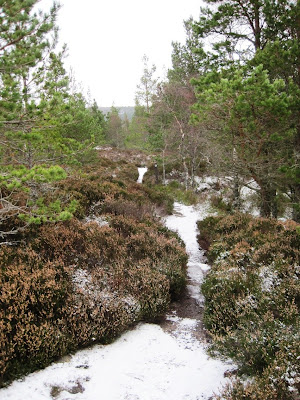 The path on Craigendarroch, Deeside