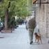 """""""El hombre y su perro"""" te tocará el corazón"""
