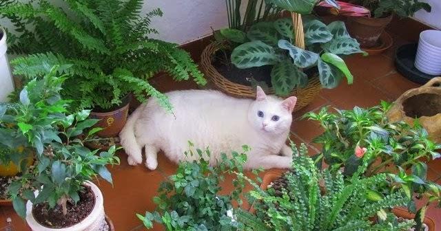 Plantas Y Flores Plantas T Xicas Para Las Mascotas