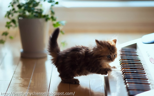 Kitten musician.