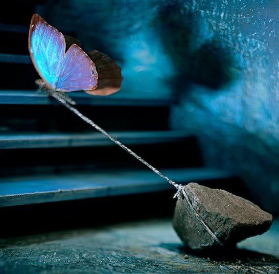 http://3.bp.blogspot.com/-JUzz1wuKPsM/ThpSPfzNyOI/AAAAAAAAJSc/4xEFAE-hOeY/s1600/borboleta.jpg