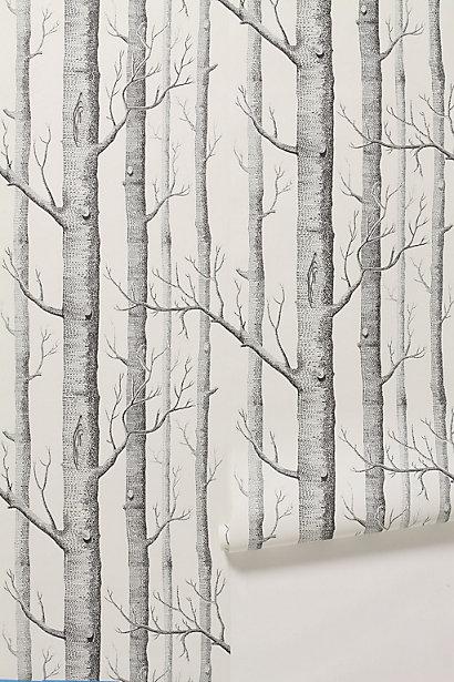 Papier Peint Forêt de jeunes bouleaux Koziel  - Papier Peint Forêt De Bouleaux