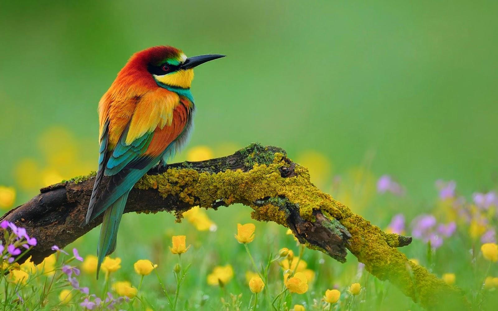 Gambar Burung Wallpaper HD