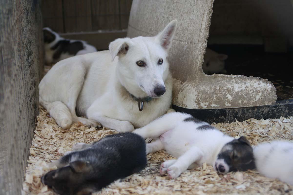 Daily Dog Kennel Near Smoky Mountain National Park