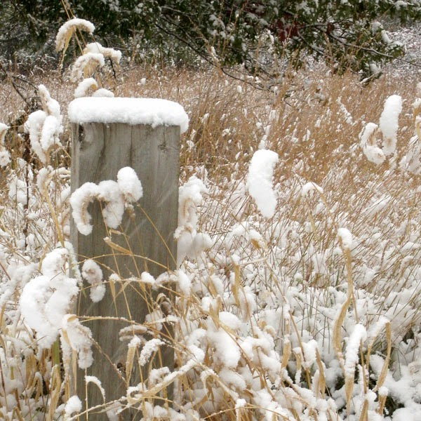 Snow Covered Wooden Post In A Prairie - Snow Photograph