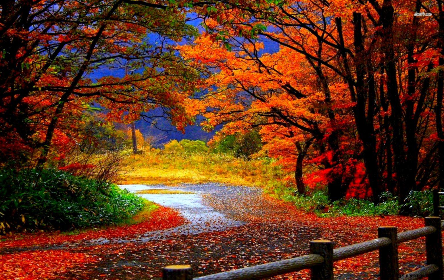 Fog Forest Autumn   wallpaper
