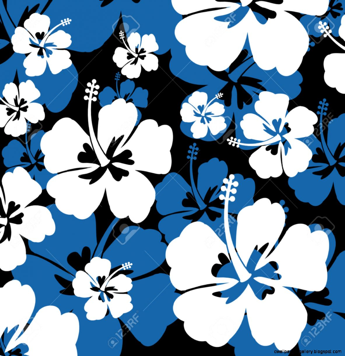 Seamless Pattern With White And Blue Hibiscus Flowers On Black