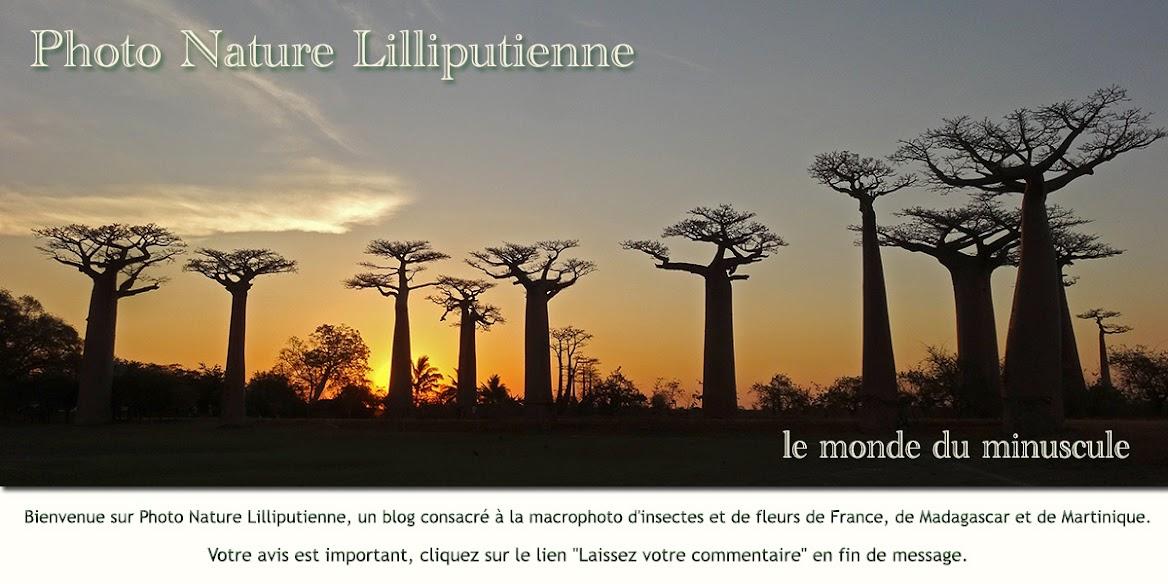Photo Nature Lilliputienne (macrophotographies)