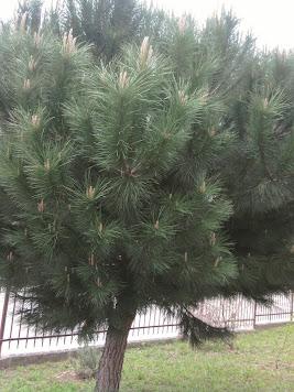 Dia da árvore - Foto das nossas amigas! ;)