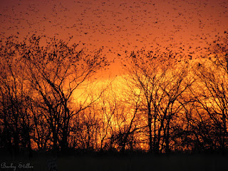 The picture of sunset and birds is a wonderful metaphor for the busy mind.