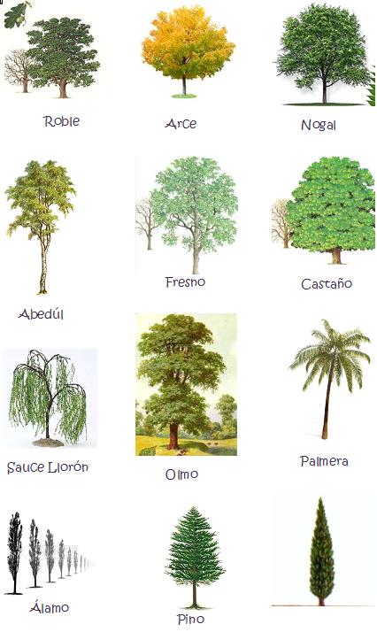 Imagenes de tipos de arboles y sus nombres imagui for Lista de arboles perennes