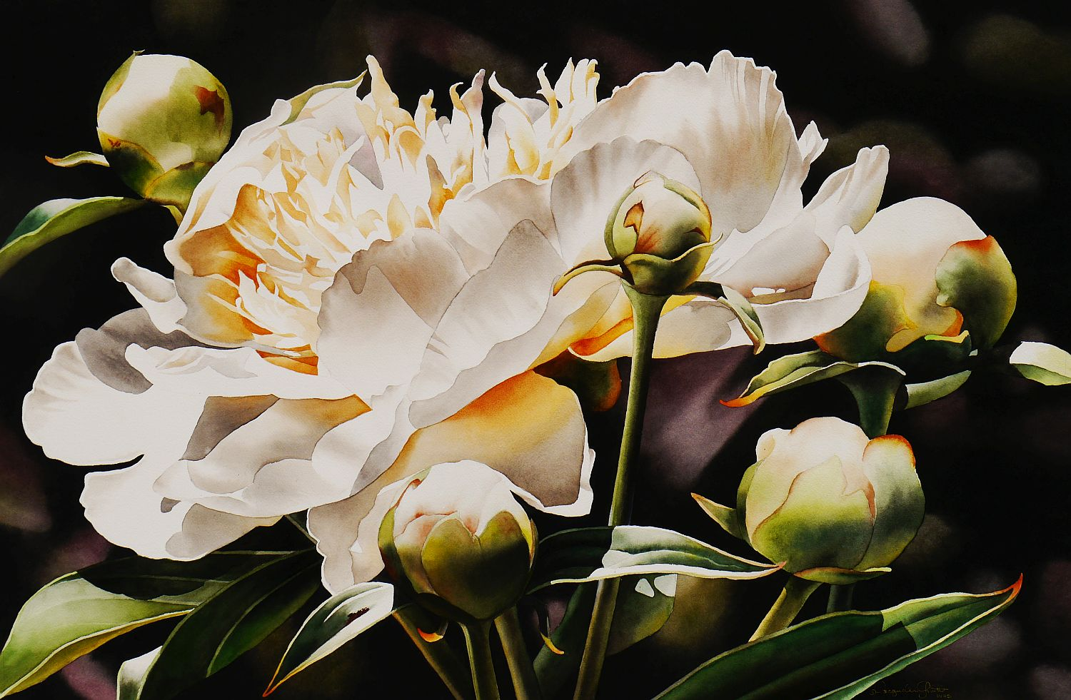 Contemporary Realism: White Peony with Buds