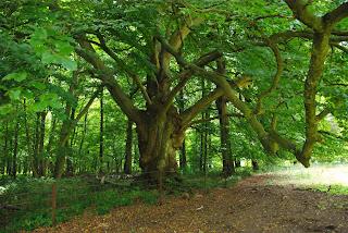 Bois de Rosée (Natura 2000)