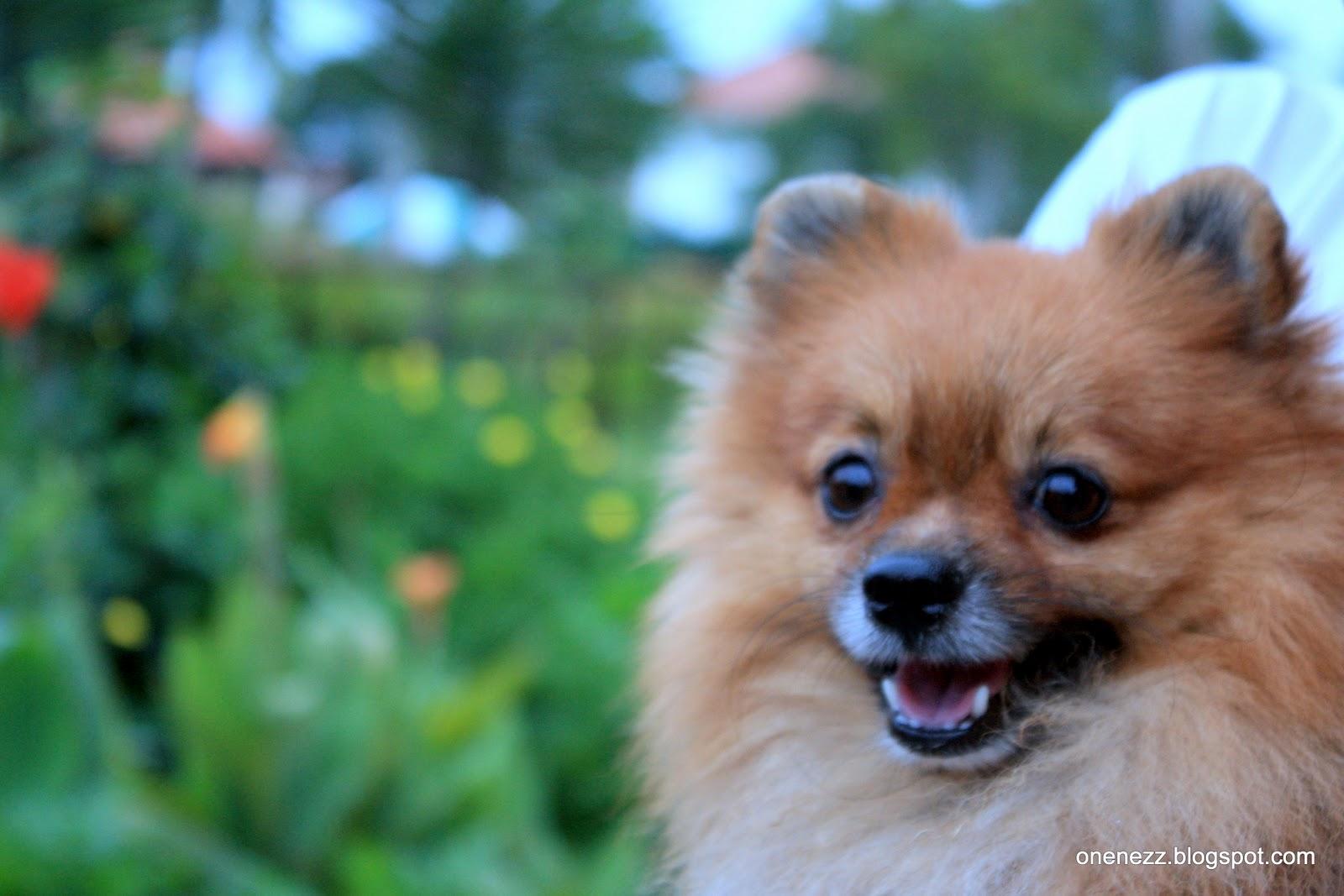 Happy Pets | Pet Creek