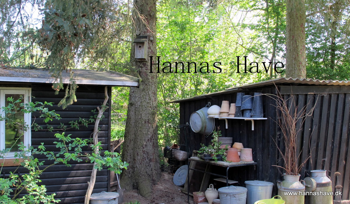Hannas Have