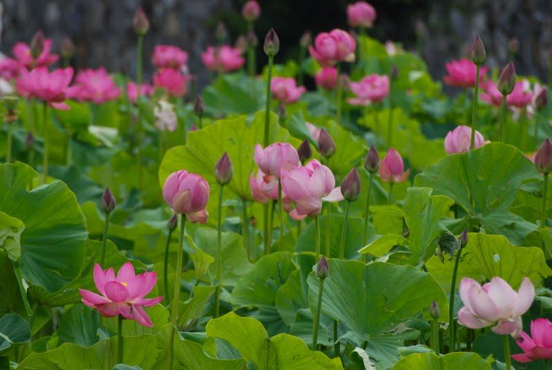 Wife Mother Gardener Biltmore Estate Gardens In