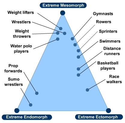 Ectomorph Mesomorph Endomorph Genetik Pengaruhi Bentuk Badan Manusia