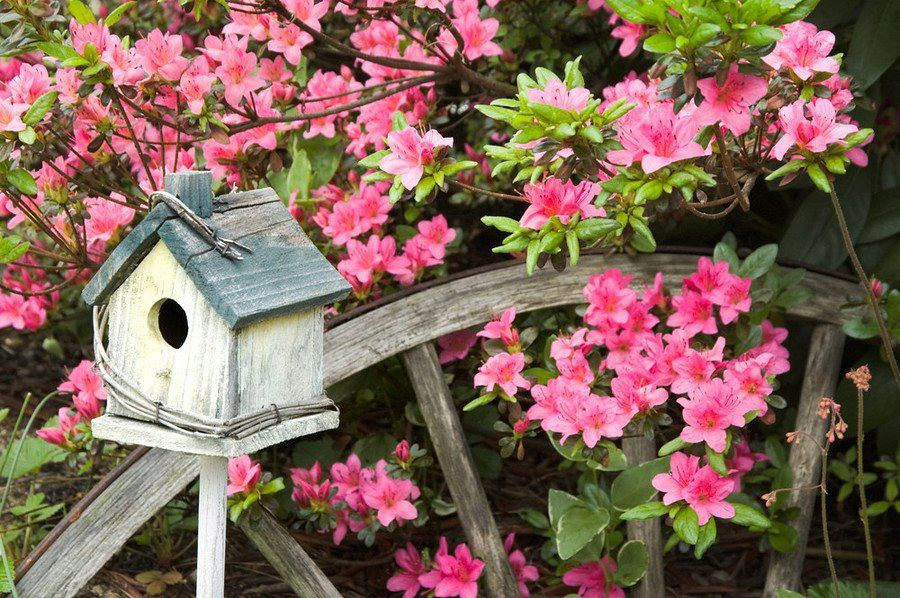 flores jardim primavera:RoAguiar: PRIMAVERA CHEGANDO – QUE VENHAM AS FLORES!