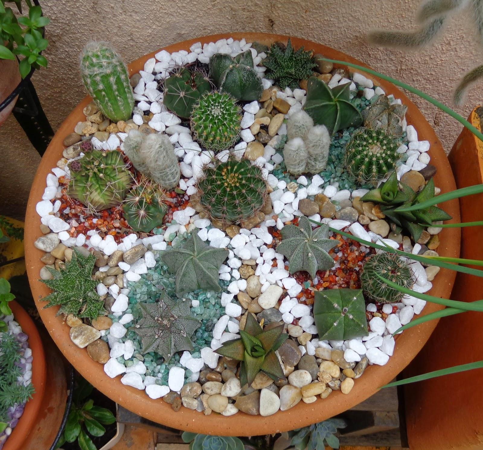 plantas de jardim que gostam de umidade : plantas de jardim que gostam de umidade:Mitos sobre cactos e suculentas – Diário de uma Sementeira