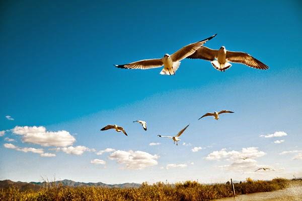 burung terbang cari rezeki