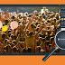 Լուսանկարների հետ կապված նոր ֆունկցիա Odnoklassniki կայքում