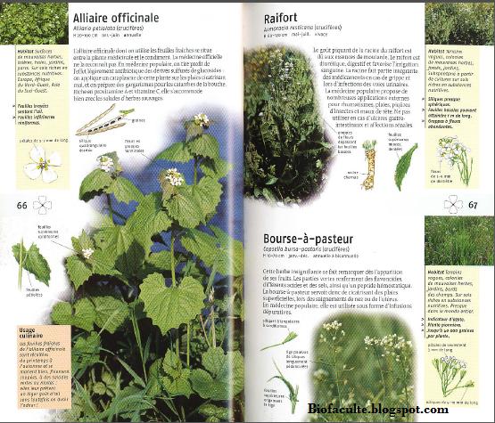 Liste de 350 plantes m dicinales pdf bio facult for Liste plantes