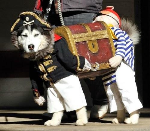 perro husky disfrazado de pirata
