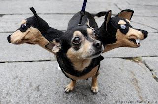 perros+chistosos+disfrazados Imagenes de Perros Chistosos..