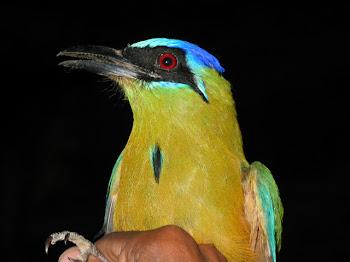 Observação de Aves em Bonito (MS)