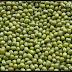 Klasifikasi Tanaman Kacang Hijau (Vigna radiata)