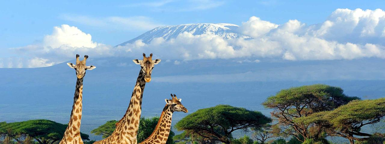 Tanzania safari destination travel deals Climbing Kilimanjaro adventures