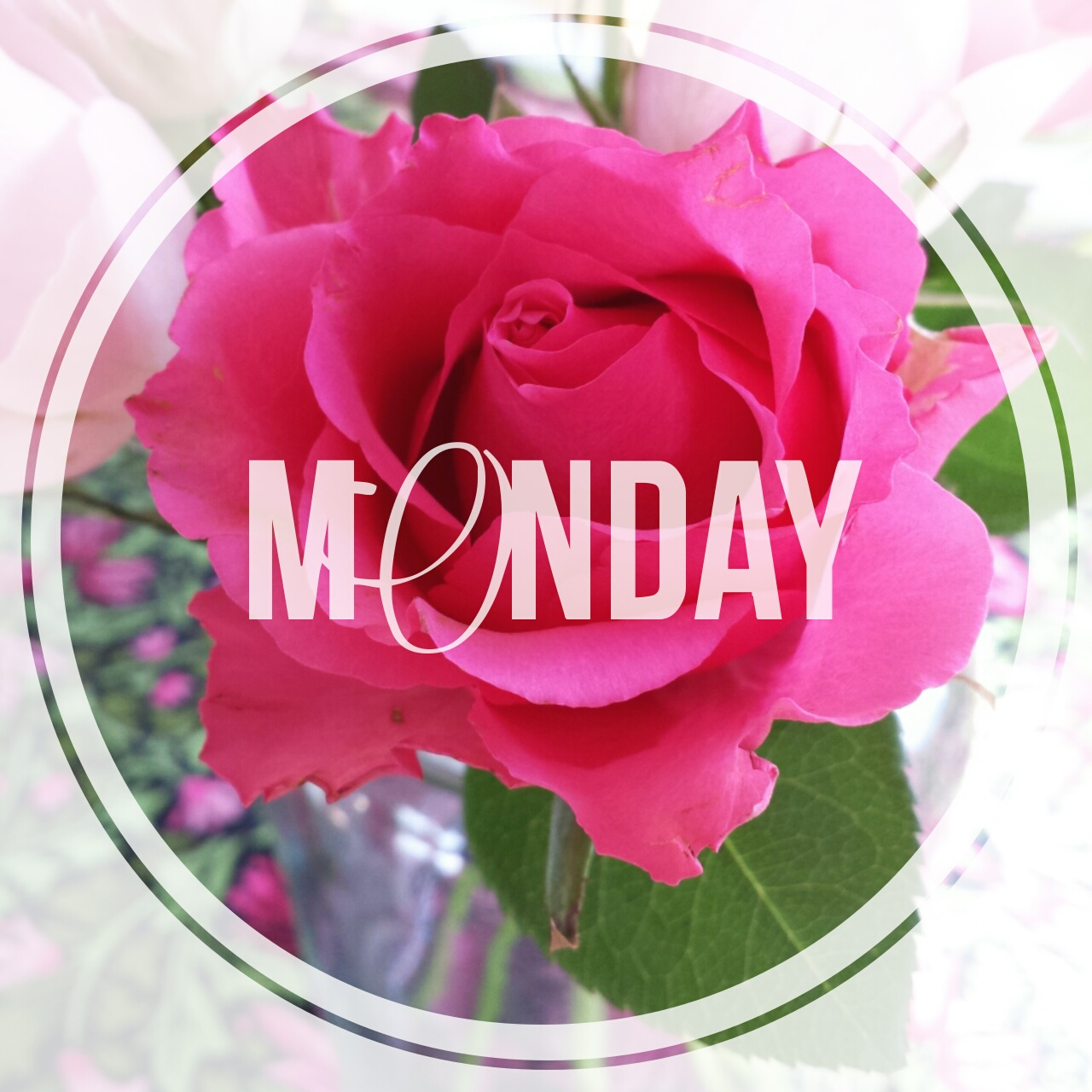 edited in rhonna designs app for android, pink rose, monday, dear jessie