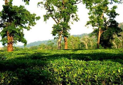 Jorhat in Assam