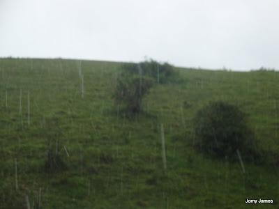 Wagamon Meadows