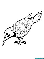 Halaman Mewarnai Gambar Burung