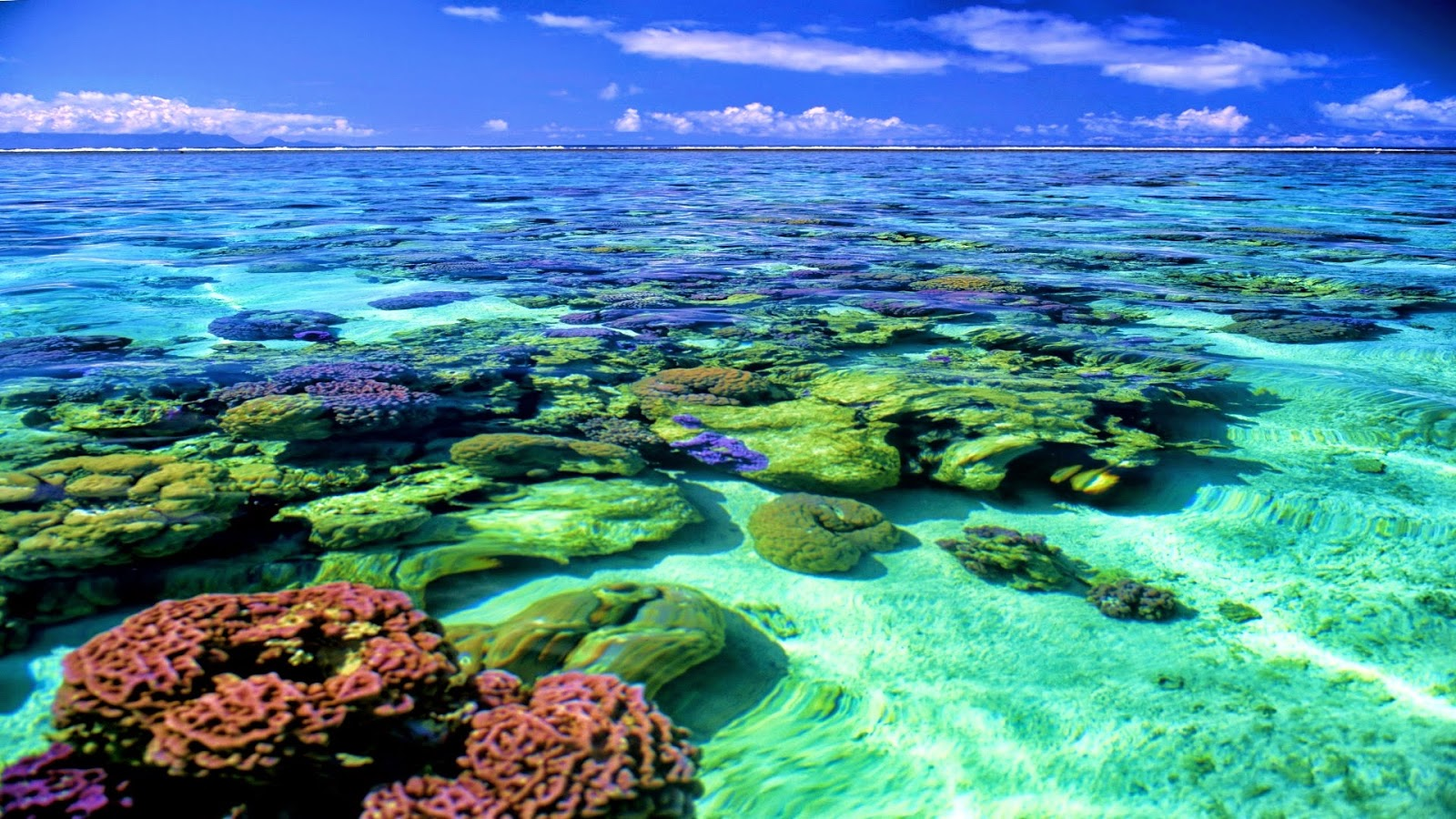 Coral Reef - HD Wallpapers | Earth Blog