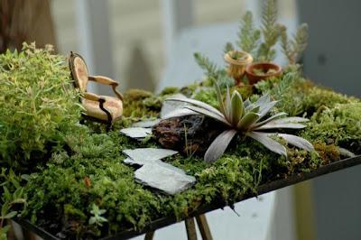 Jardines en miniatura jardiner a y paisajismo for Autoarq paisajismo