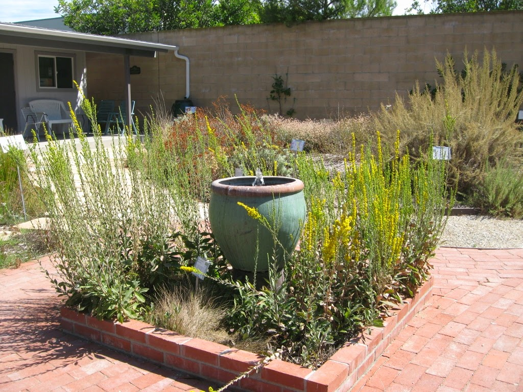 mother nature u0027s backyard a water wise garden plant of the month