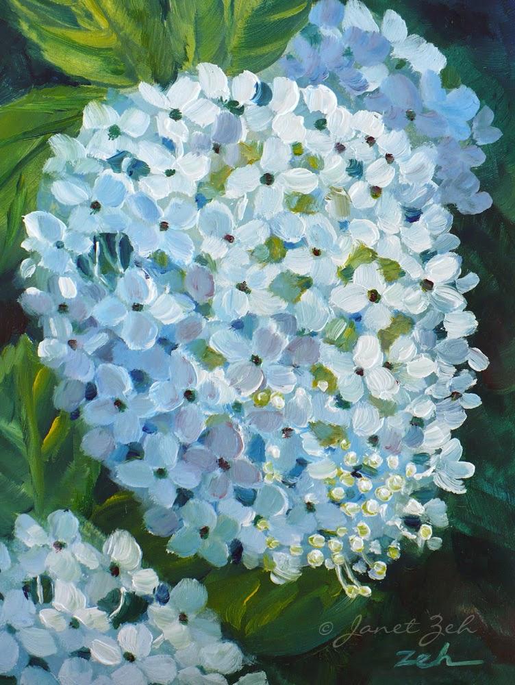 Hydrangea Blossom Fine Art Print