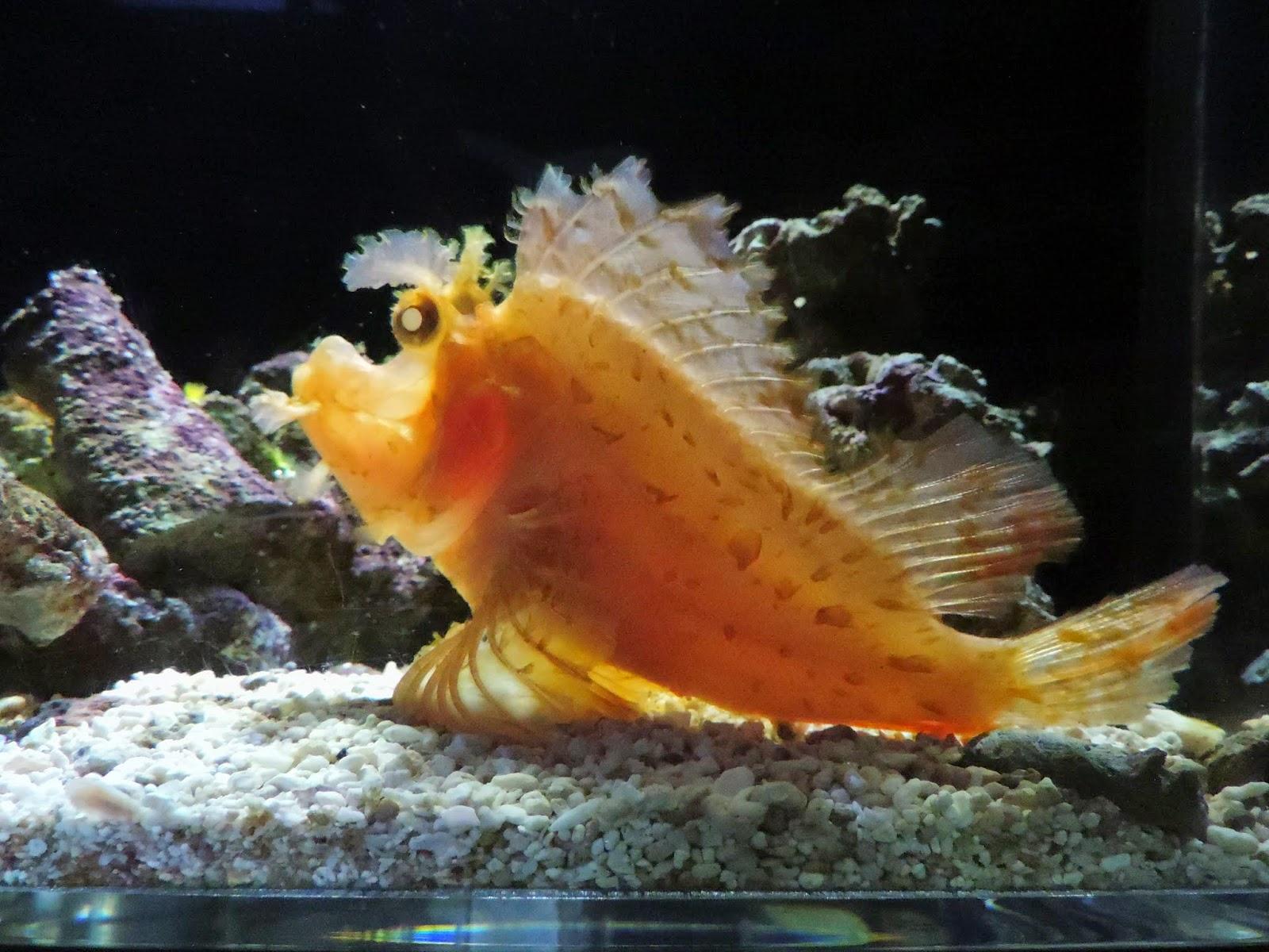 かめきちの水族館ブログ: 京都水...