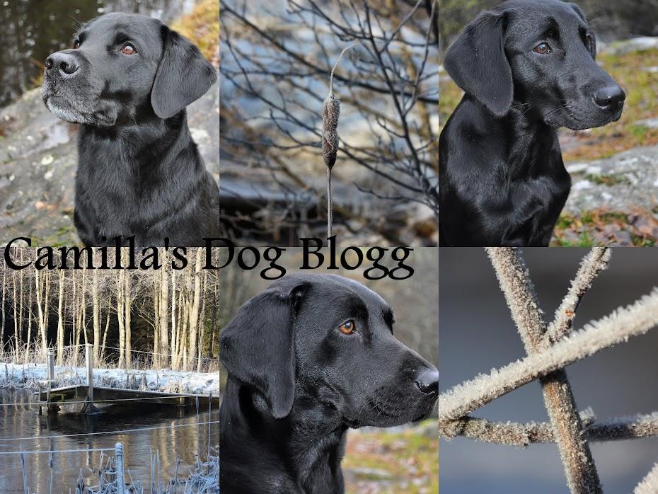 Camilla's Dog Blogg