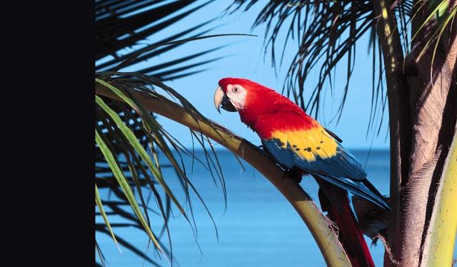 en güzel renkli papağan masaüstü arka plan resmi