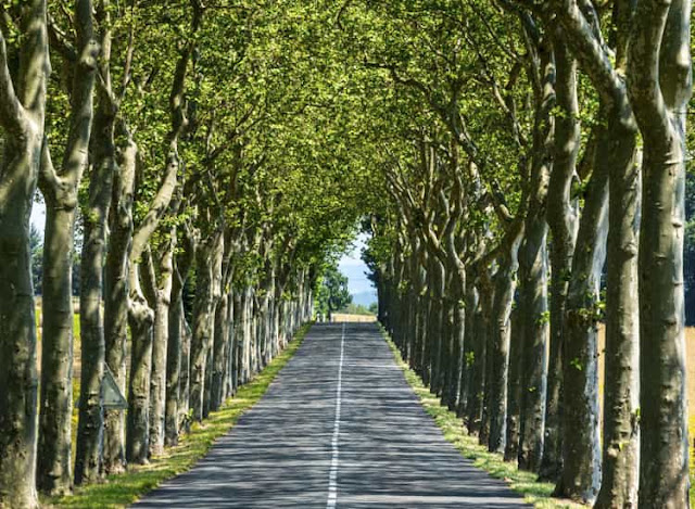 Shady Drive, Languedoc, France