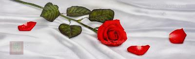 rosas-rojas-al-oleo