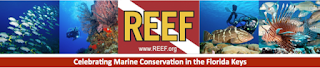 Reef Festival