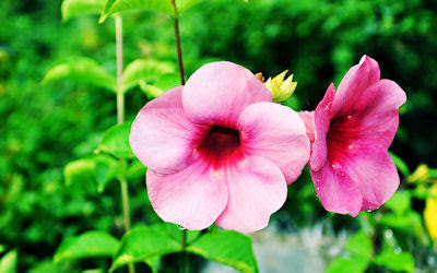 Te invito a cambiar el fondo de su pc o laptop con esta linda fotografía de flores color púrpura